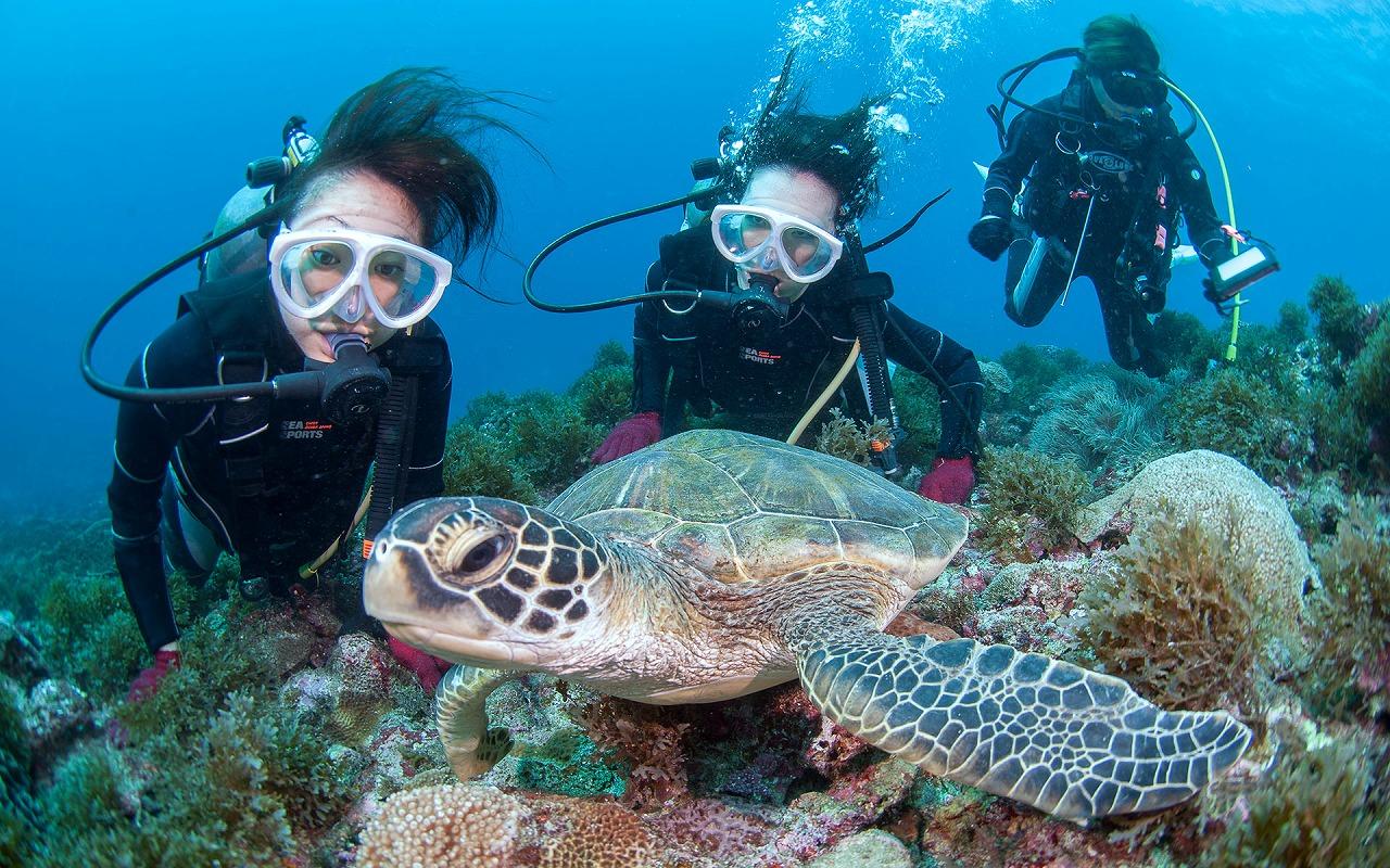 屋久島体験ダイビング!ウミガメの泳ぐ美しい海を満喫♪(No.8)