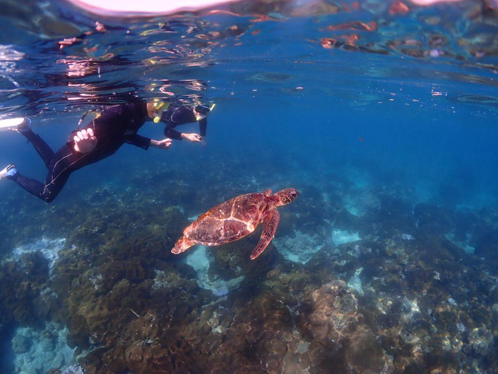 屋久島の海でシュノーケリング!のんびりウミガメやお魚を観察♪-半日コース-(No.11)
