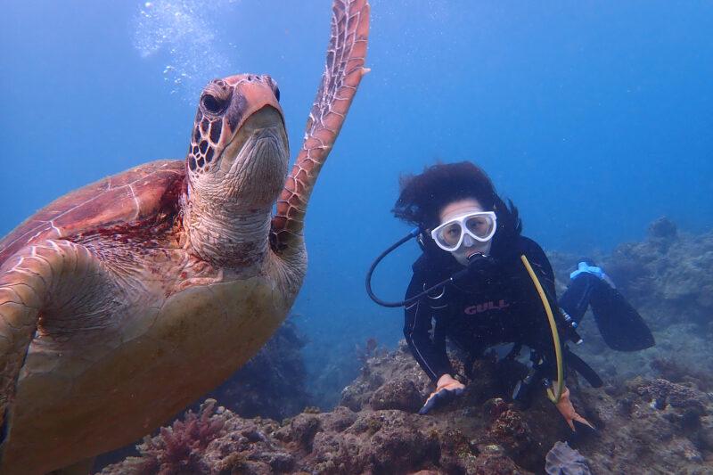 【屋久島・体験ダイビング】高確率でウミガメと遭遇!スペシャル体験ダイビングコース(3.5時間)(No.64)