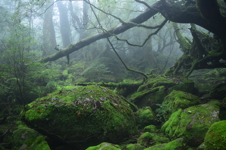 もののけの森イメージ