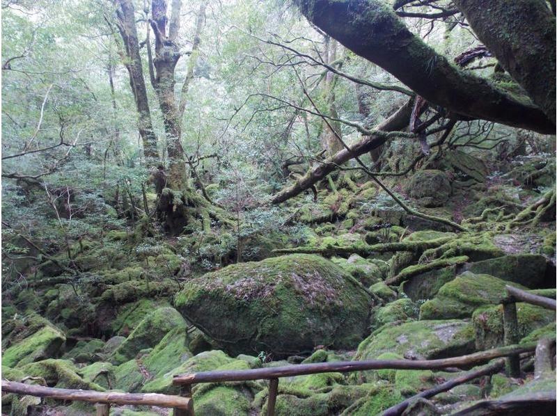 屋久島のもののけの森